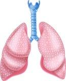 Illustration de bande dessinée des poumons de fumeurs sur le fond blanc Photo stock