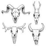 Illustration de biologie ou d'anatomie gravé tiré par la main dans le vieux style de croquis et de vintage silhouette de crâne ou Images libres de droits