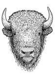Illustration de bison, dessin, gravure, encre, schéma, vecteur illustration stock