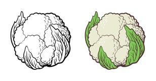 Illustration de chou-fleur Images libres de droits