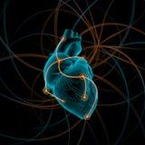Illustration de coeur avec des impulsions illustration stock