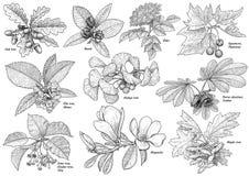 Illustration de collection de branche d'arbre, dessin, gravure, encre, schéma, vecteur illustration libre de droits