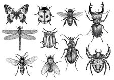Illustration de collection d'insecte, gravure, dessin, encre photo stock