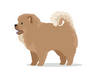 Illustration de conception de Chow-Chow Dog Breed Vector Flat Images libres de droits