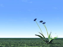 Illustration de cornflower bleu Image stock