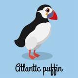 Illustration de couleur de macareux de bande dessinée Oiseau courant Photos stock