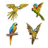 Illustration de couleur de vecteur Seth des perroquets dans différents angles illustration de vecteur