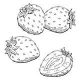 Illustration de croquis d'isolement par blanc noir graphique de fraise Photos libres de droits