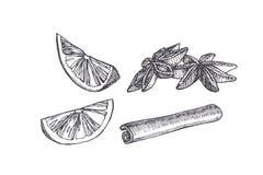 Illustration de cru de vecteur de la tranche de cardamome, de cannelle et d'agrume d'isolement sur le blanc Épices dans le style  illustration stock