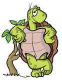 Illustration de dessin animé de tortue ou de tortue Photos stock