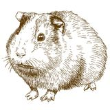 Illustration de dessin de gravure de cobaye Image stock