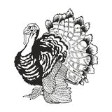 Illustration de dinde de dessin de main illustration stock