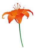 Illustration de fleur de lis Images stock