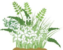 Illustration de fleur de vecteur Photographie stock libre de droits