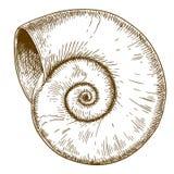 Illustration de gravure de coquille de spirall Photo libre de droits
