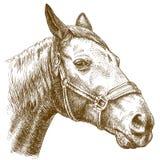 Illustration de gravure de tête de cheval Photographie stock