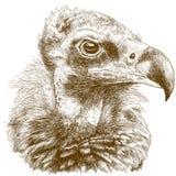 Illustration de gravure de vautour cinereous Images libres de droits