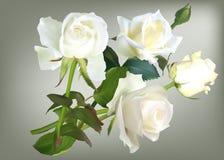 Illustration de groupe de quatre de blanc fleurs de rose Photos libres de droits