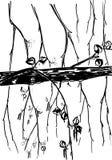 Illustration de la branche tir?e par la main de bouleau d'isolement sur le blanc illustration libre de droits