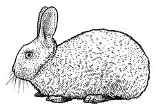 Illustration de lapin, dessin, gravure, encre, schéma, vecteur illustration de vecteur