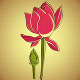Illustration de lotus Photographie stock