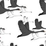 Illustration de modèle sans couture des cygnes de vol de dessin Tiré par la main, conception graphique de griffonnage avec des oi Photos libres de droits