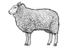 Illustration de moutons, dessin, gravure, encre, schéma, vecteur Photographie stock