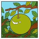Illustration de nature, fond de couleur, Apple sur une branche Photo libre de droits