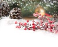 Illustration de Noël Branch Photographie stock libre de droits