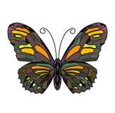 Illustration de papillon illustration de vecteur