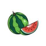 Illustration de pastèque de vecteur sur le fond blanc Photo stock