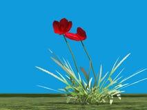 Illustration de pavot rouge Photo libre de droits