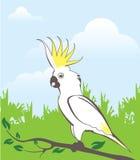 Illustration de perroquet Photos libres de droits