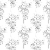 Illustration de Physalis d'isolement sur le fond blanc Configuration sans joint Texture de conception d'ornement floral pour le p illustration stock