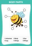 Illustration de pièce de vocabulaire d'abeille de corps Image stock
