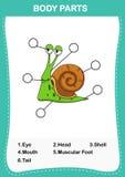 Illustration de pièce de vocabulaire d'escargot de corps illustration stock