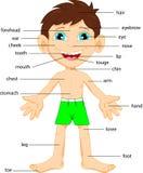 Illustration de pièce de vocabulaire de corps illustration stock