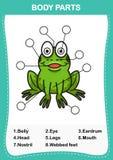 Illustration de pièce de vocabulaire de grenouille de corps illustration stock