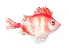 Illustration de poissons Photos libres de droits