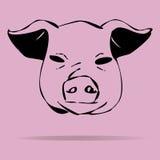 Illustration de porcs sur un fond coloré Photographie stock libre de droits