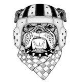 Illustration de port de sport de casque de rugby d'animal sauvage de bouledogue Photographie stock libre de droits