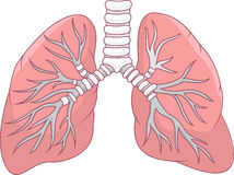 Poumon humain Image libre de droits