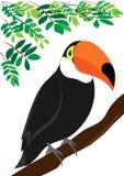 Illustration de Toucan Photos stock