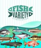 Illustration de variété de poissons illustration stock