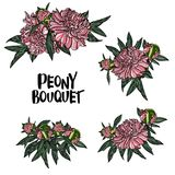 Illustration de vecteur de bouquet de pivoine Illustration Stock