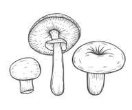 Illustration de vecteur de champignon illustration stock