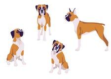 Illustration de vecteur de chien de race de boxeur dans différentes poses Image libre de droits