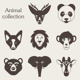 Illustration de vecteur d'ensemble animal drôle d'icône Images stock