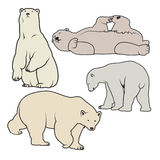 Illustration de vecteur d'ours blanc Image stock