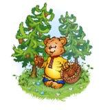 Illustration de vecteur d'ours d'ours brun d'Eurasie avec des cônes de pin Photographie stock